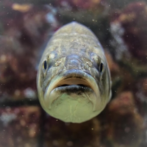 Portrait of a fish